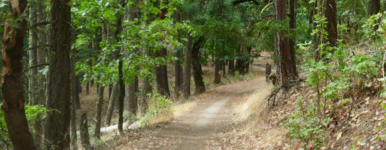 Mt Ashland to town via Bull Gap, Missing Links, Martys, Caterpillar, Lizard, Rabbit Hole, Alice and BTI